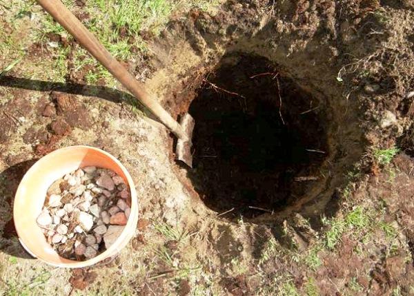 Когда сажать деревья в саду осенью 73