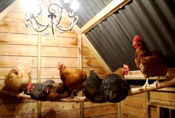 Как сохранить курицу в домашних условиях