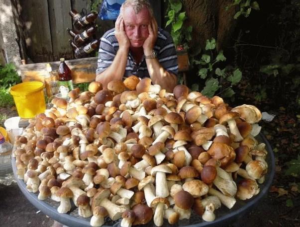 Выращивание грибов на дому белый гриб 71
