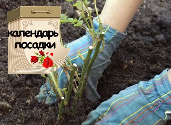 Навесы для сада своими руками фото