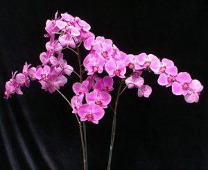 Янтарная кислота для орхидей как применять видео