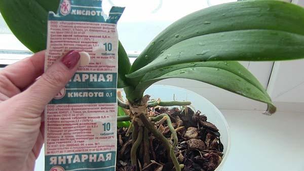 Для чего орхидеям нужна янтарная кислота
