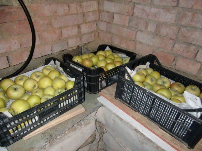 как хранить яблоки на зиму в домашних условиях в холодильнике