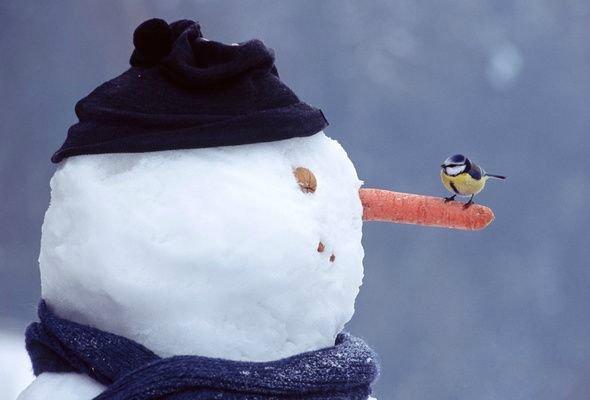 Как сделать лицо снеговику из снега