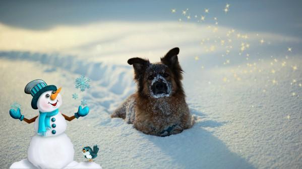 Как слепить снеговика, если снег рыхлый и не лепится