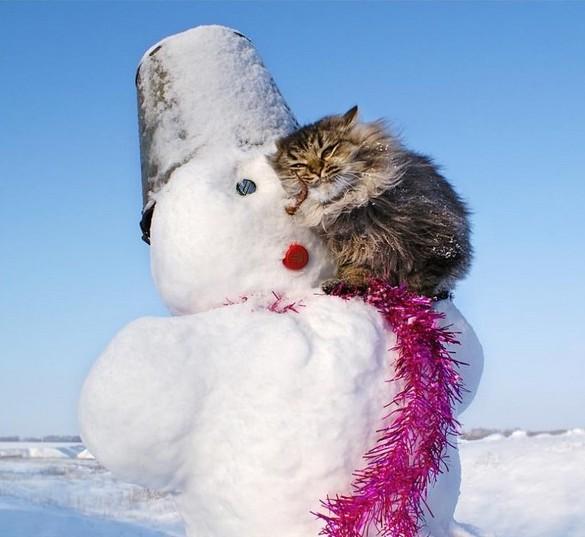 Снеговик с котом