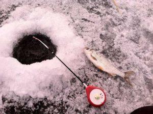 Техника и тактика ловли плотвы на мормышку зимой