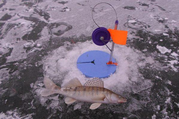 Зимняя рыбалка на судака на жерлицы