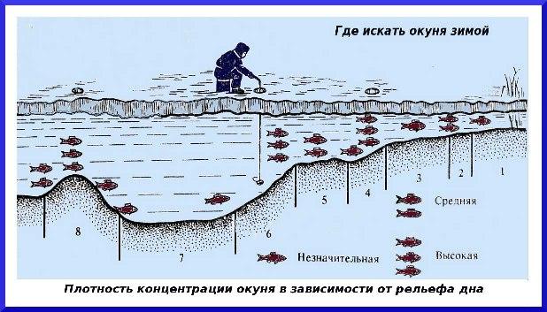 где в балаково клюет рыба