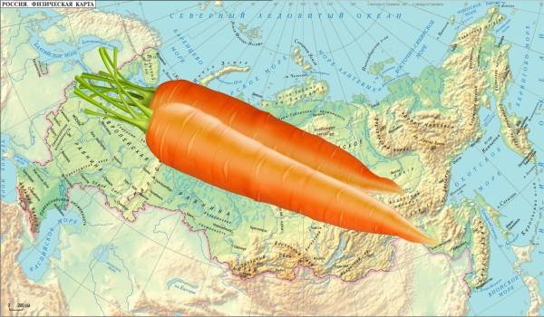 Когда можно сеять морковь весной
