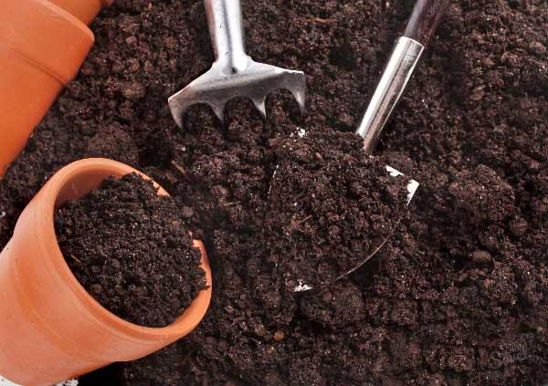 Подготовка грунта для пикировки рассады томатов