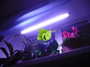 Подсветка фитолампой шпината на подоконнике