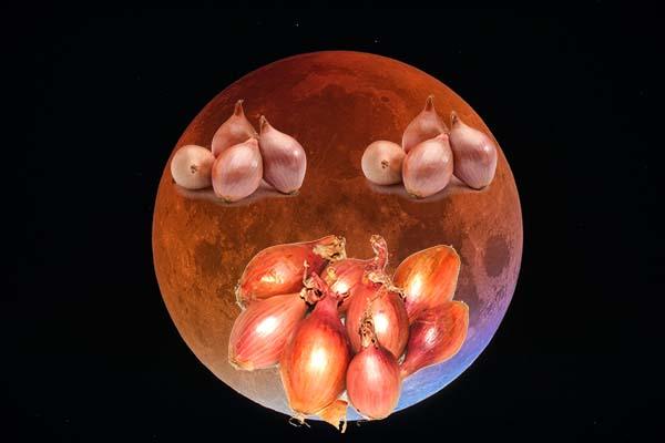 Сроки посадки лука севка по лунному календарю
