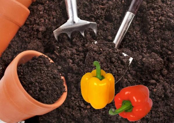 Когда сажать перец в 2019 году на рассаду по лунному календарю для теплицы и открытого грунта