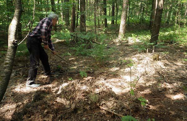 Рододендроны посадка и уход в открытом грунте для новичков