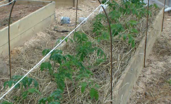 В какую землю сажать рассаду помидор