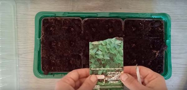 Посев семян петрушки для быстрого выращивания