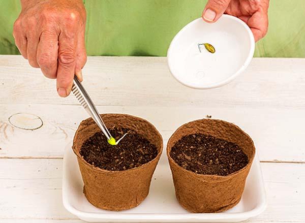 Тыква как выращивать и когда сажать