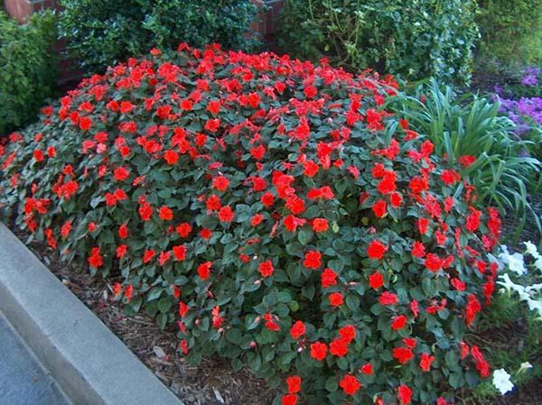 Какие цветы садят на кладбище