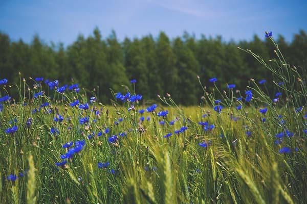 Цветы полевые и травы» пользователя Alena