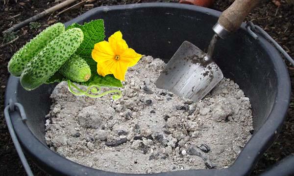 Подкормка огурцов в открытом грунте чем подкармливать как удобрять