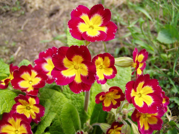 Какие цветы можно и нужно сажать осенью