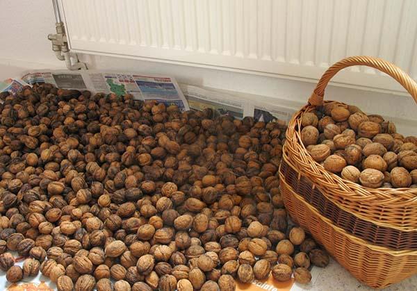 Сушка грецких орехов в скорлупе в духовке