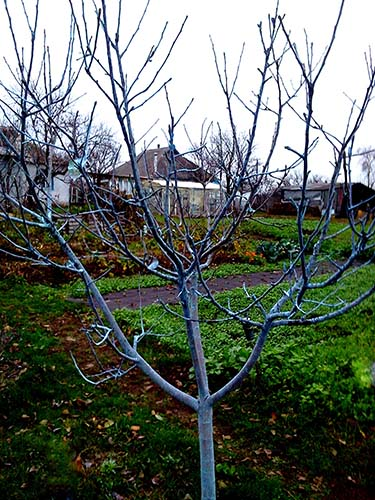 Чим кропити дерева восени