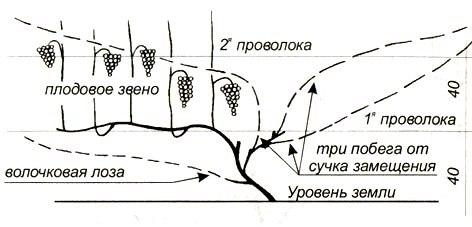 Как устроить искусственный листопад для винограда