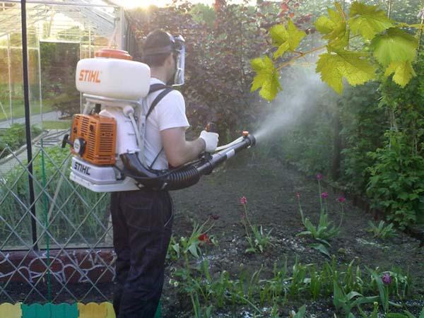 Железный купорос для винограда как разводить для обработки летом осенью и весной