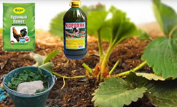 Чем удобрять клубнику осенью при посадке