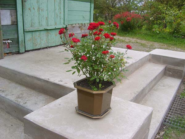 Чем укутать розы на зиму