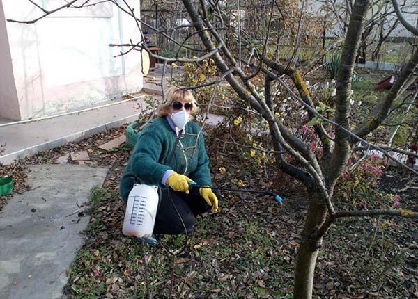 Обработка сада железным купоросом осенью