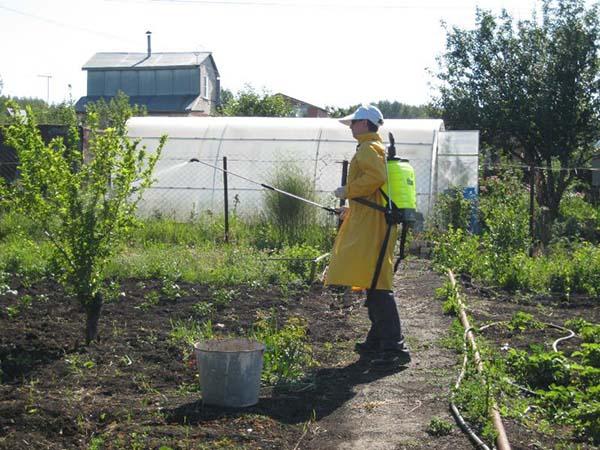 Железный купорос для защиты сада от болезней и вредителей