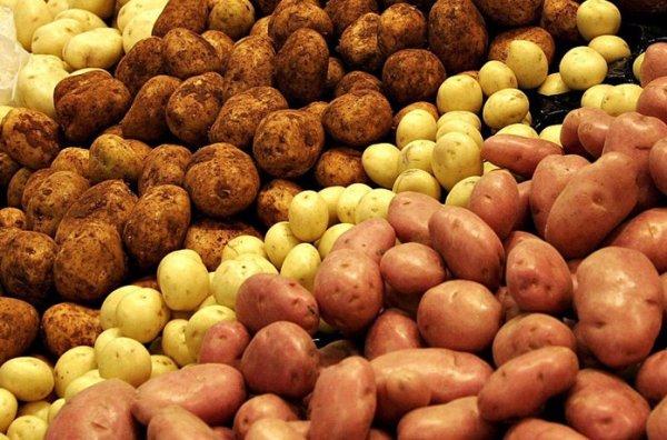 лучшие семена картофеля для восточной сибири