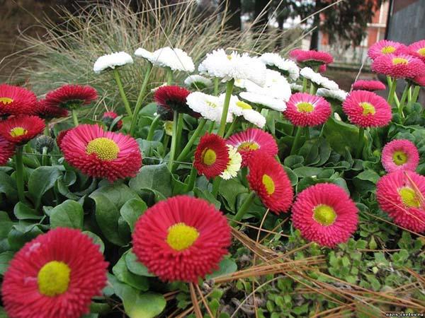 Какие цветы можно посеять на рассаду в феврале