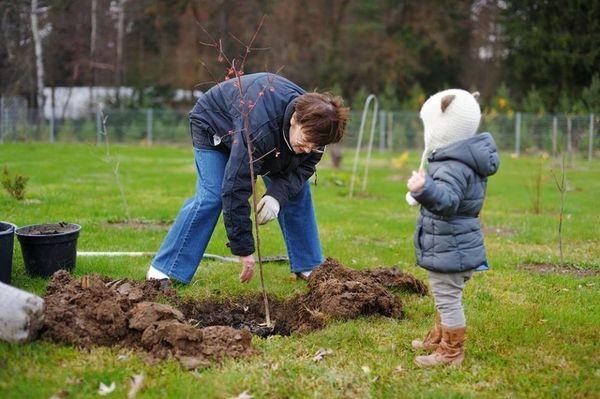 Когда сажать плодовые деревья и кустарники осенью